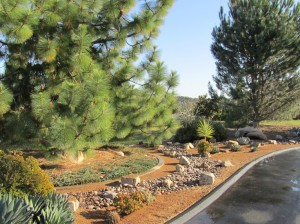 Professional Landscaper San Diego