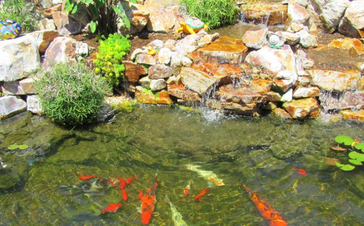 Water Garden Landscaping Ideas Poway