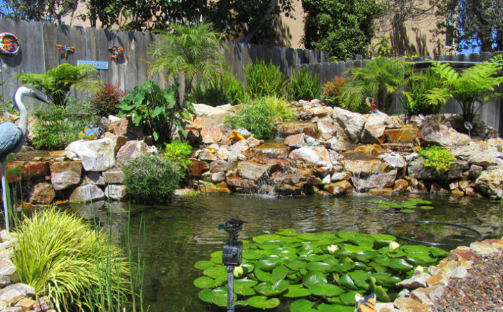 Water garden landscaping ideas pacific dreamscapes for Backyard landscaping ideas san diego