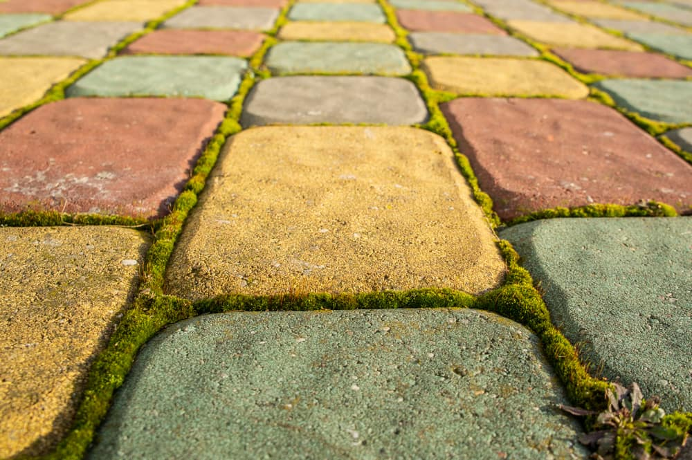 Is moss between pavers bad