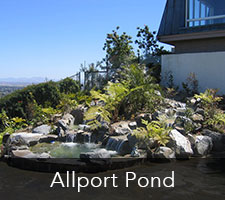 Allport Pond Project