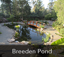 Breeden Pond Project
