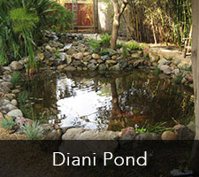 Diani Pond Project