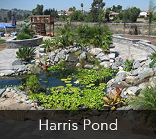 Harris Pond Project