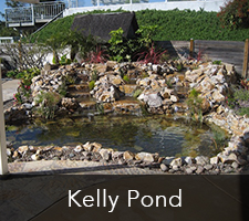 Kelly Pond Project