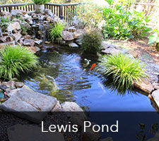 Lewis Pond Project