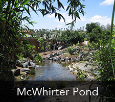 McWhirter Pond Project
