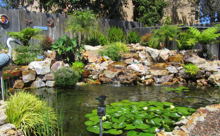 Water Garden Landscaping Ideas San Diego