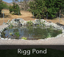 Rigg Pond Project