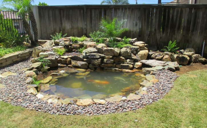 san diego pond builders 10