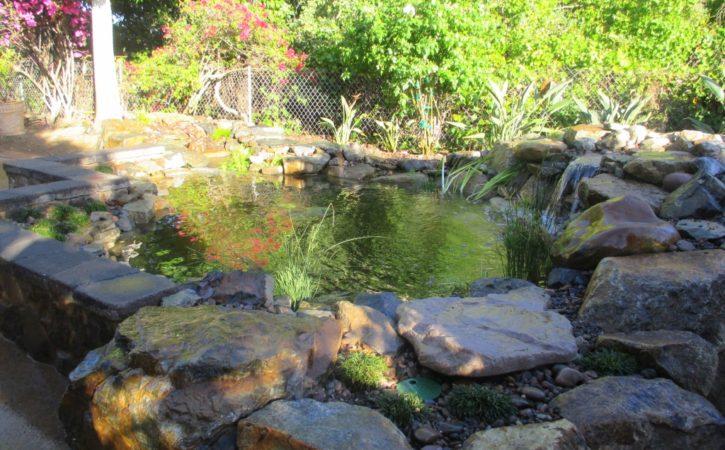 san diego pond builders 4