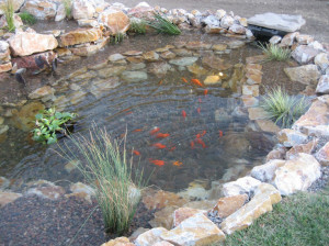 Backyard Fish Pond