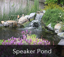 Speaker Pond Project