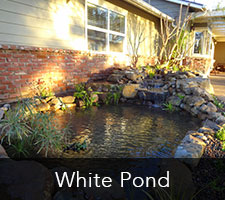 White Pond Project