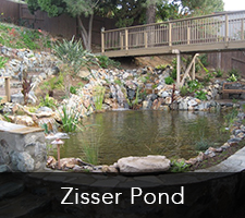 Zisser Pond Project 1